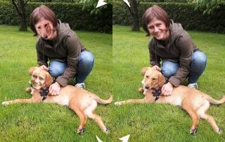 Gezeigt wird ein Beispiel von Deepfakes in Form einer Head-Swapping-App, mit Mensch und Hund.