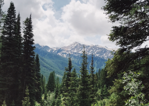 Photo of a mountain topped with snow, framed by forested area in the Great Bear Wilderness, Flathead National Forest, Montana.