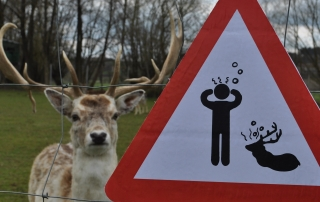A warning sign saying that wild makes people sick and a deer with eye contact.